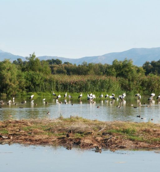 aiguamolls ocells