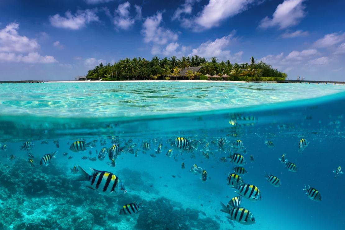 peixos kuramati